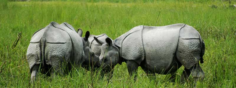 Tea Plantation and Rhino Tour